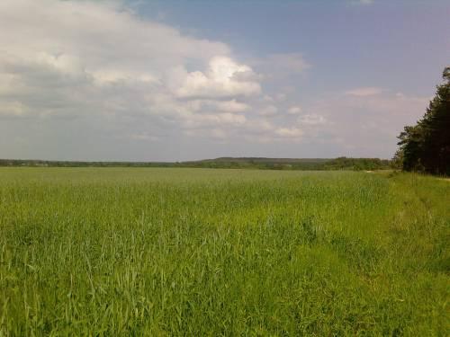 Выделяемое поле